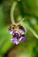 bee 2 by gd08