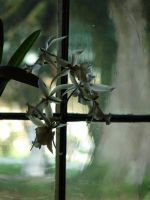 Flowers on Glass by ButterflyRitsuka