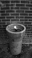 Drinking Fountain 01 by TwistedLabel