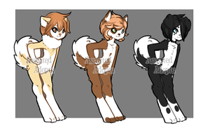 Adopts(1/3) (OPEN) by Assorted-Adopts