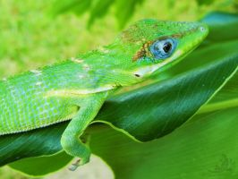 Lounging Around by OECDLapushfan101