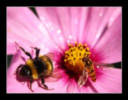Bumble Bee and Fly by Woolf20