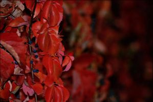 Autunno in rosso by Amersill