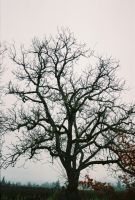 Tree by spicorder-stock