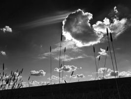 Clouds Late Afternoon by davepphotographer