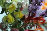 Inside the Bouquet by LadyBethsheba