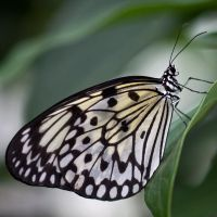 Butterfly by CharmingPhotography
