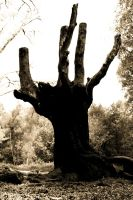 Epping Forest: Tree1 by Coigach