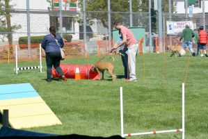 2014 Dog Festival, Try It Dog Obstacles 9 by Miss-Tbones