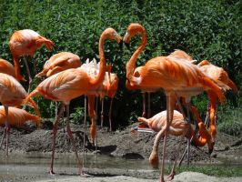 Red flamingos kiss by Cloudwhisperer67