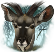 Kudu -Realism Paint Study by warrior-oji