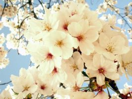 Full Bloom 2012 05 by freyiathelove