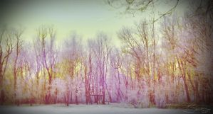 First Infared Photo - Trees by dotgfx