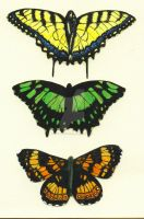 Wallpaper Butterflies by flightresponse