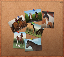 Summer Photoboard [FEAT. new NWB foal!] by HightorFarm
