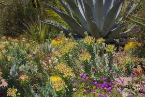 Native Garden by PatGoltz