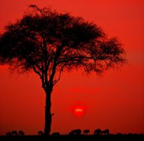 Masai Mara by catman-suha