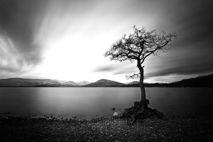 Millarochy Tree, Loch Lomond by ketscha