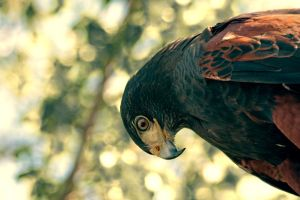 eye of an eagle by lindaatje