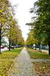 Autumn in Brno by Haban