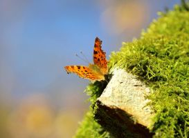 the comma by tsigane