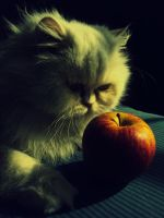 snow white cat by HOOREIN