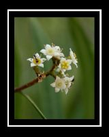 Anty Flowers 1 by shelly349