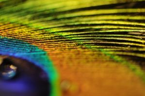 Feather rainbow by harrietslegg