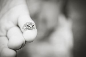 Tiny frog by flyktplan