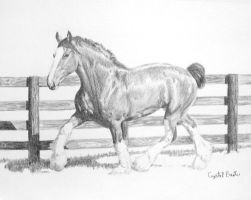 Clydesdale by HorselessHerder