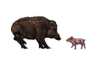 How to draw pigs, wild boars and warthogs by LadyAway