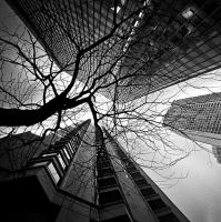 Chicago CLXXVI by DanielJButler