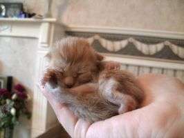 Bran, My Little Fighter by Featherologist
