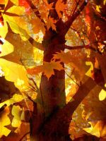 tower of autumn colour by artemissere