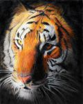 The Eye of the Tiger by saintaker