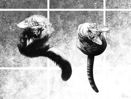 my cats - b/w by PENICKart