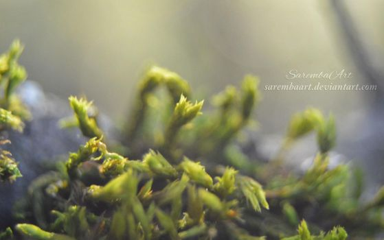 Nature's Art - Moss by SarembaArt