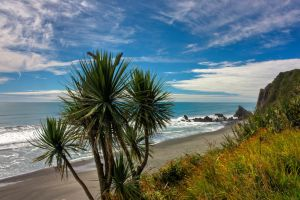Beached Cabbage Tree... by Mikelyjohnsono