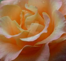 The beauty within by Daggles67