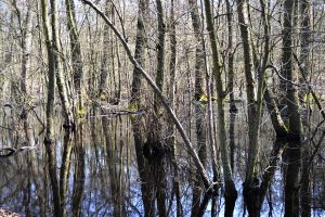 Forrest Swamp by FrankAndCarySTOCK