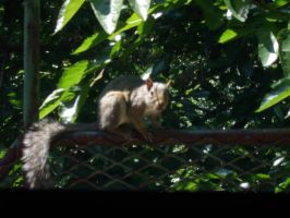 Anonymous Squirrel 2 by seiai89