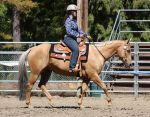 Horse Show Stock 009 by Notorious-Stock