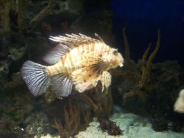 Lionfish 3 by harbinger-stock