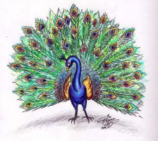 Draw a Peacock colored by Diana-Huang