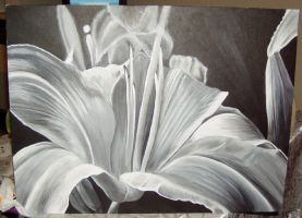 BW Lilly Painting by UpsilonEexe