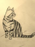 Tabby cat by Amykat12