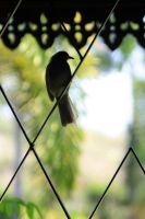 Window Bird by sukinahito