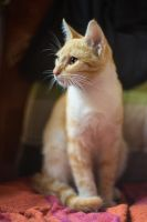 Photo of a cat by marcinwuu