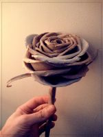 Toilet Roll Rose 2 Update by deepset