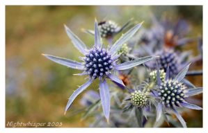 Umbria 19 - Flower by Thedrjazz